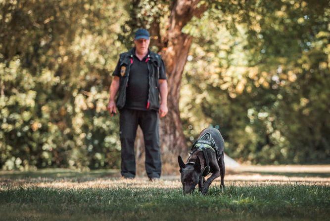 Hondeninstructeur Jan Reuvekamp heeft een van zijn honden getraind in het opsporen van duizendknoop. Foto: Jan Reuvekamp